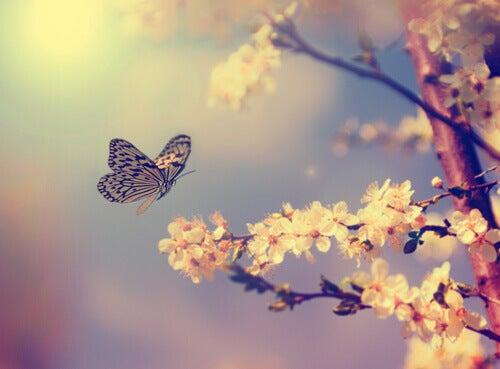 Jos voit unelmoida jostakin asiasta, voit myös saavuttaa sen.