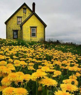Keltainen talo ja kukat