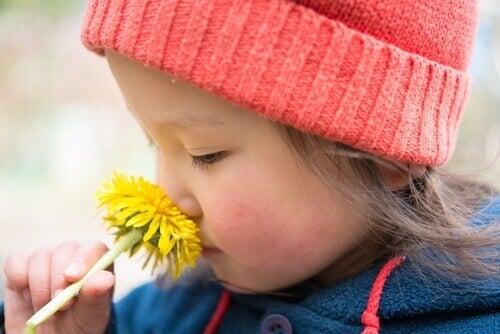 Voikukan tuoreet varret saattavat olla myrkyllisiä lapsille.