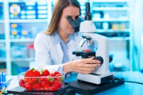 mansikoita tutkitaan laboratoriossa
