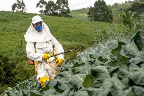 mies myrkyttää kasveja
