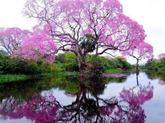 iso puu ja kaunis maisema