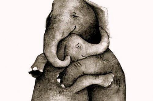 Hyviä asioita norsujen hali