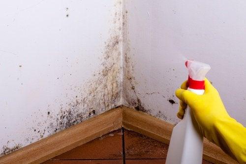 7 tehokasta tapaa poistaa hometta kotoa