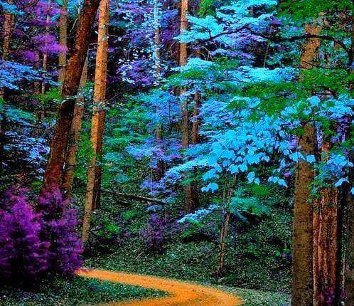 metsä täynnä värejä