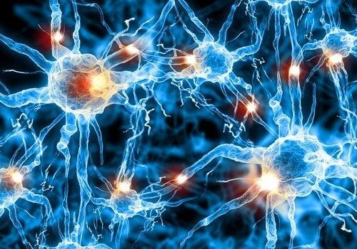 neuronit toimivat