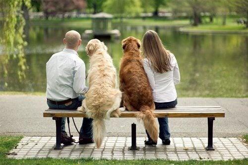 pariskunta ja heidän koirat