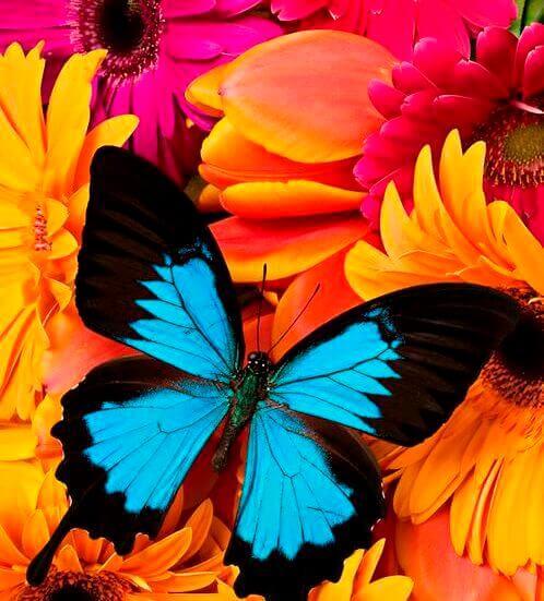 perhonen ja värit