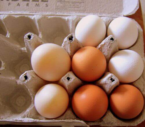 kierrätä sama munakenno käyttöön