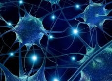 Aivot ja hermosolut