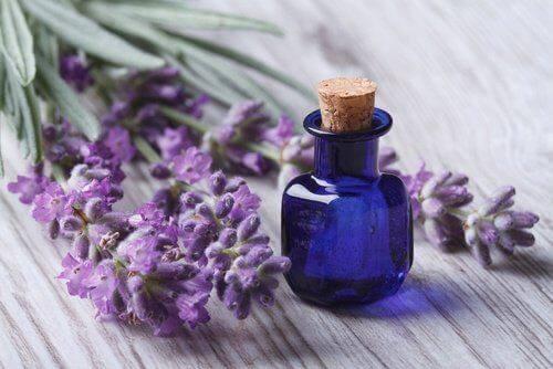laventeli eteerinen öljy