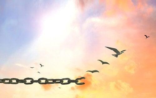 linnut vapautuvat