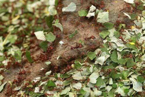 Käytä pieni määrä kanelia kasveillesi, se karkoittaa ötökät.