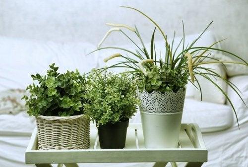 6 unenlaatua parantavaa kasvia