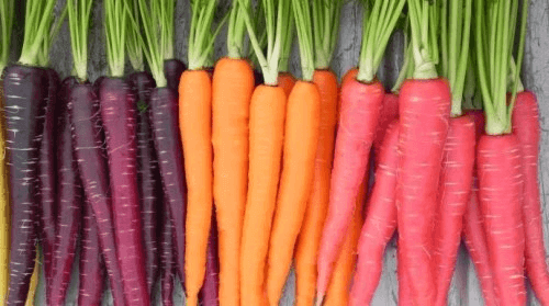Eri värisiä porkkanoita
