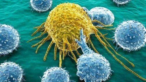Munasarja- ja haimasyövän hoitoon on kehitetty uusi molekyyli