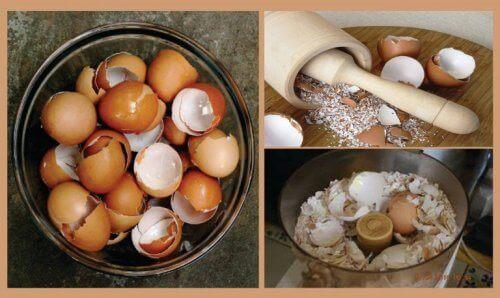 kananmunankuoret