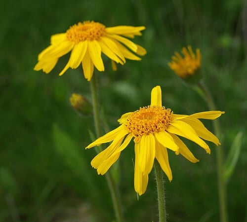 kaunis keltainen kukka