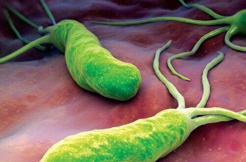 Helikobakteeri voi olla syynä vatsaongelmiin