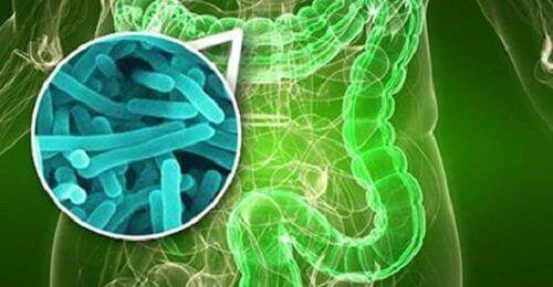 helikobakteeri voi aiheuttaa vatsaongelmia