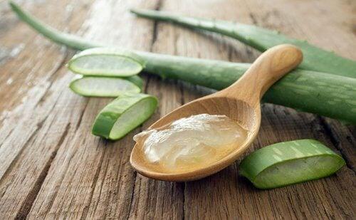 Aloe veran antibakteeriset ominaisuudet auttavat hillitsemään tulehdusta.