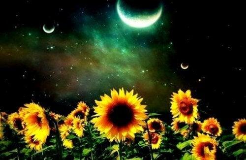 auringonkukat ja kuu