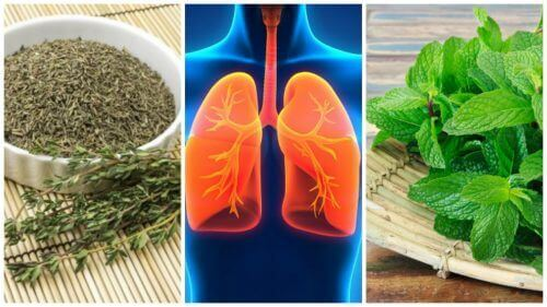 8 yrttiä, jotka parantavat keuhkojen terveyttä