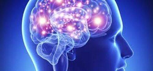 Aivotoimintaa