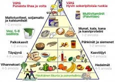uusi ruokapyramidi