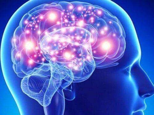 Parhaat yrtit ja mausteet aivoille