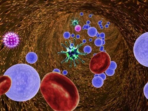 virukset ja bakteerit