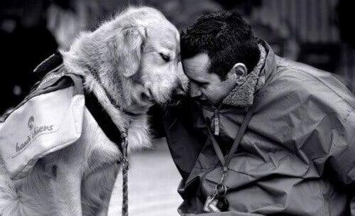 koira auttaa koti-ikävässä