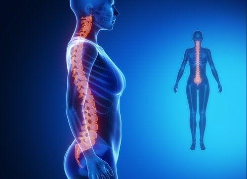 kuinka bioninen selkäranka toimii