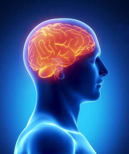 8 terveellistä ruokaa aivoille
