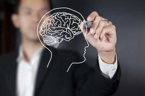 mies piirtää aivot