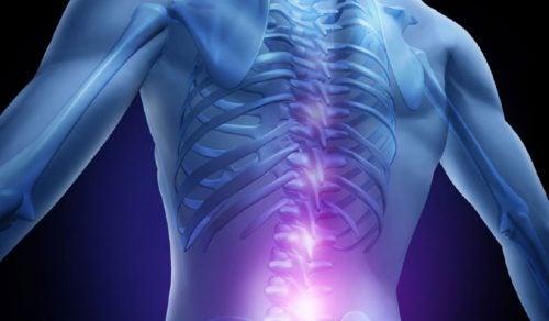 Mikrokuidut voivat auttaa selkärangan uudelleenluonnissa.