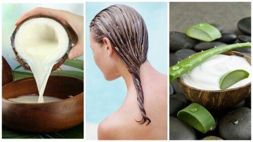 Taistele hiustenlähtöä vastaan tällä aloe vera- ja kookosmaitohoidolla