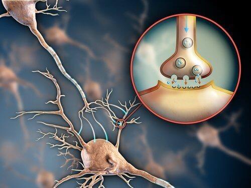 hermoston vahvistamiseen