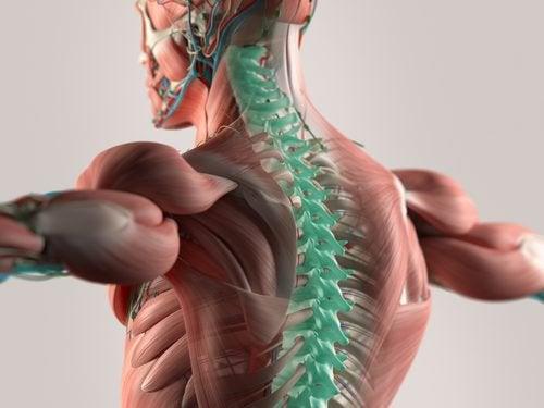 Mikrokuidut voivat auttaa selkärangan uudelleenluonnissa