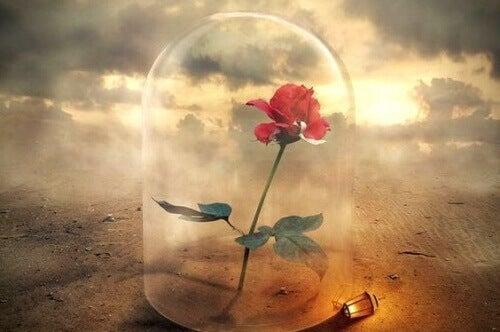 kukka kärsii lasikuvun alla