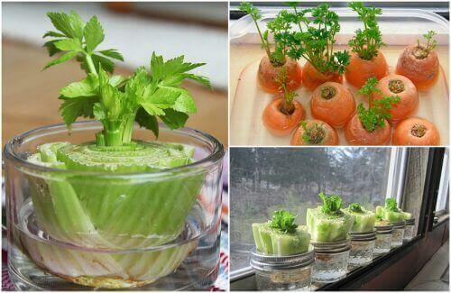5 kasvista, jotka on helppo kasvattaa uudelleen