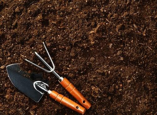 kasvattaa mustikoita multaan