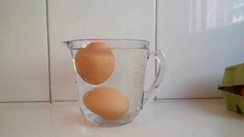 näin tunnistat pilaantuneen kananmunan