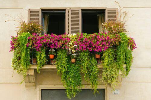 kasveja ja kukkia parvekkeella