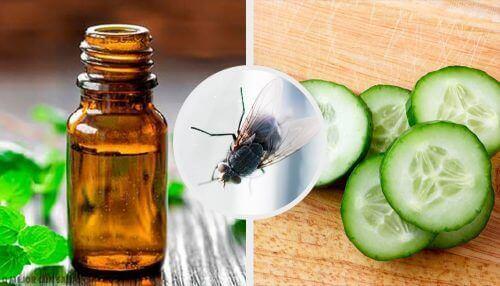 7 luonnollista kärpäskarkotetta