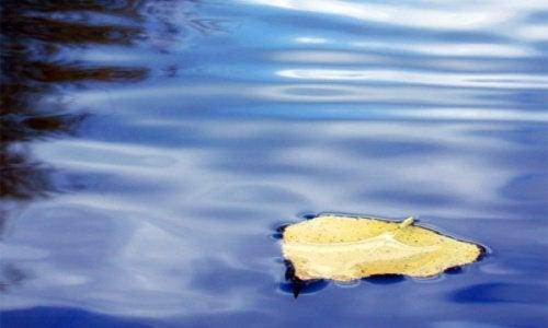 lehti vedessä