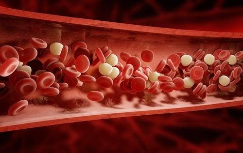 7 hyötyä ihon harjauksesta verenkiertoon
