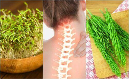 7 lääkinnällistä kasvia, jotka auttavat parantamaan luustosi terveyttä