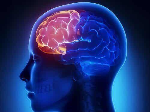 4 harjoitusta pitääksesi iäkkäänäkin mielen kirkkaana