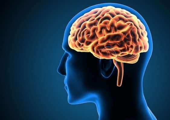 Tutkijat ovat löytäneet aivoalueen, joka kehittyy vielä 30. ikävuoden jälkeenkin.